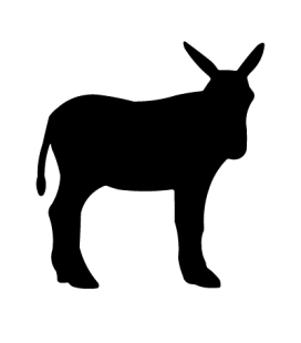 Ane01