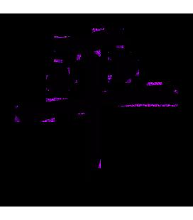Idéogramme Paix