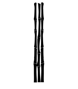 Bambou 02