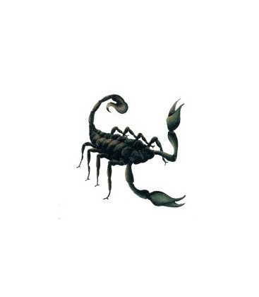 Car Tattoo-Scorpion